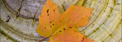 Caption: Autumn has arrived...! (Photo by Bryan Hansel)