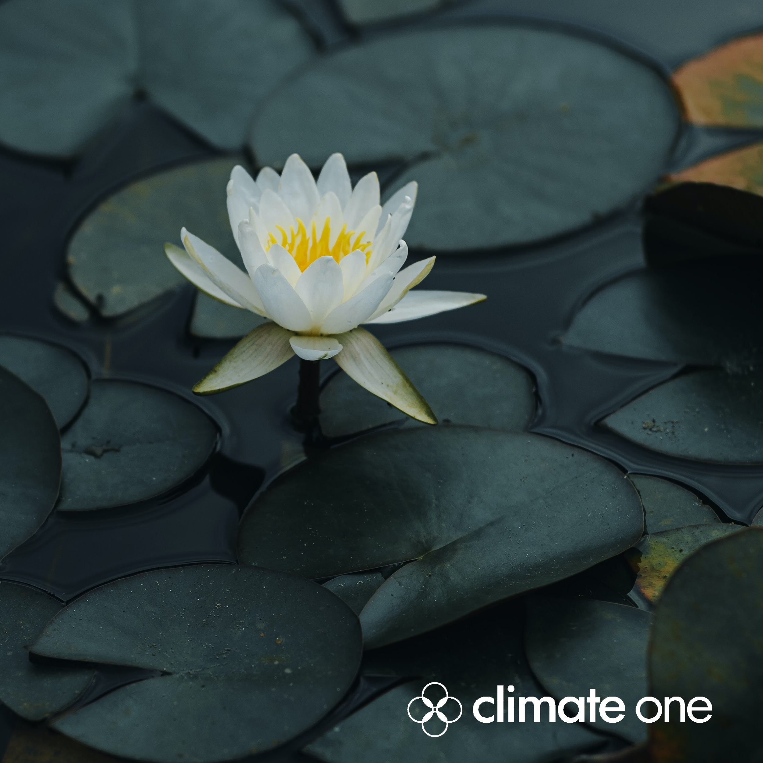 Prx_and_megaphone-zen_and_climate_small