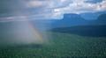 Rainbow-rainforest-mesas-photo_small