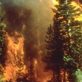 Wildfire_in_california_small