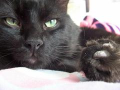 My cat has cute feets. Credit: