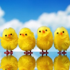 "Credit: <a href=""http://www.shutterstock.com/pic-73172341/stock-photo-easter-chicks-against-sky-background.html?src=csl_recent_image-1"">Shutterstock</a>"