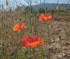 Caption: Wildflowers in Provence., Credit: Courtesy of Lydia Roelandts, Antwerp, Belgium