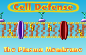 Cell Defense: The Plasma Membrane