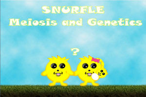 Snurfle Meiosis and Genetics | The Science Game Center