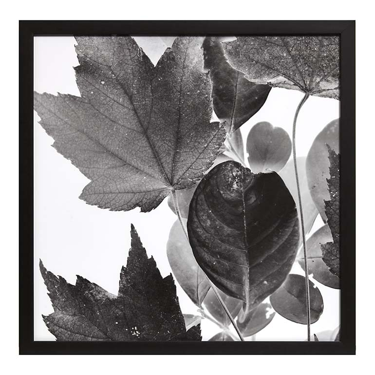 Xray Leaves IV