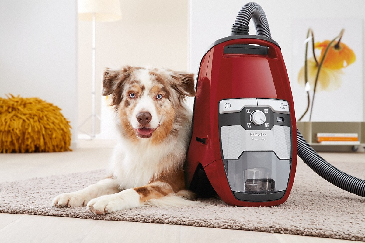 Model: Blizzard CX1 HomeCare PowerLine - SKCE0 | Bagless canister vacuum cleanerswith electrobrush for thorough cleaning of heavy-duty carpeting.