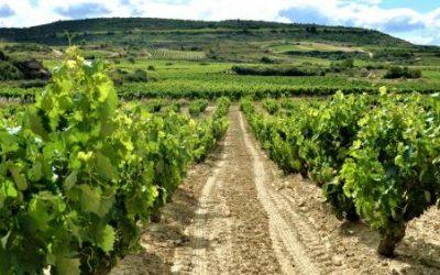 El sector del vino teme ser el más perjudicado por los aranceles de EEUU