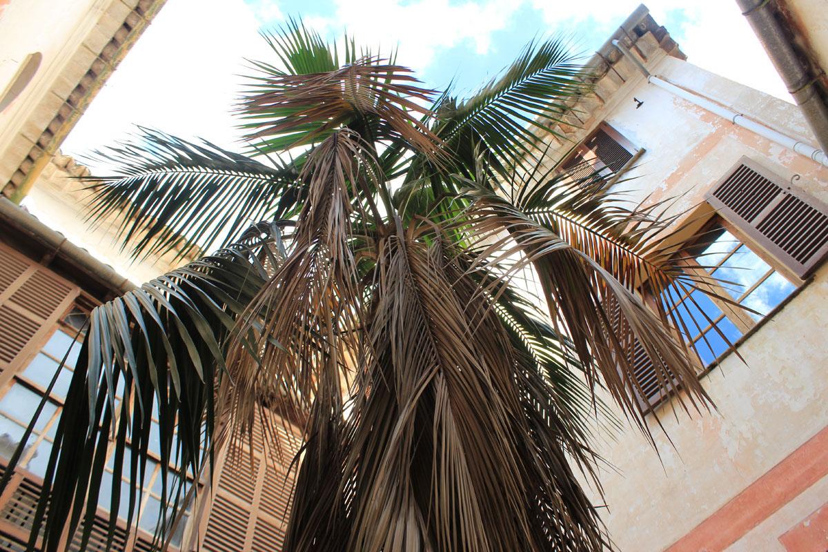 Images de la propriété immobilière de Appartement au rez-de-chaussée avec jardin...