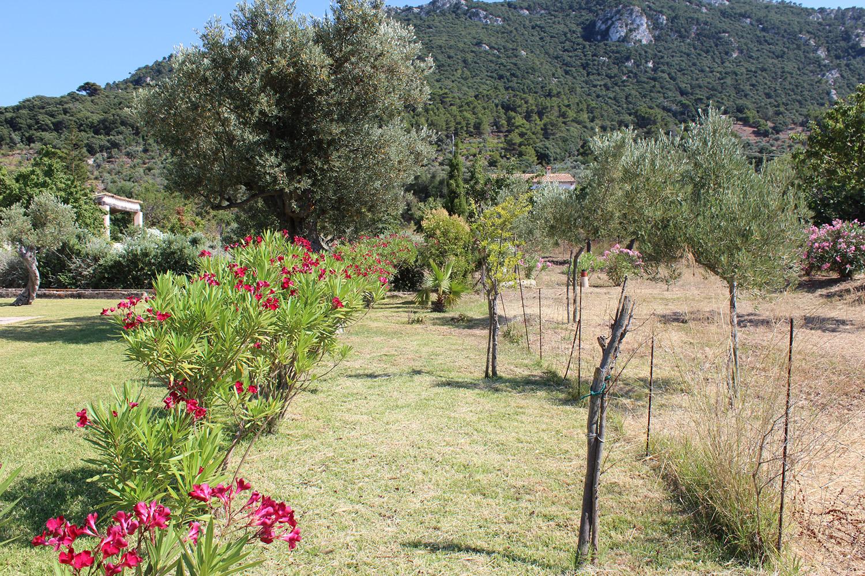 Imágenes de la propiedad inmobiliaria de Entorno impresionante cerca de Valldemossa....
