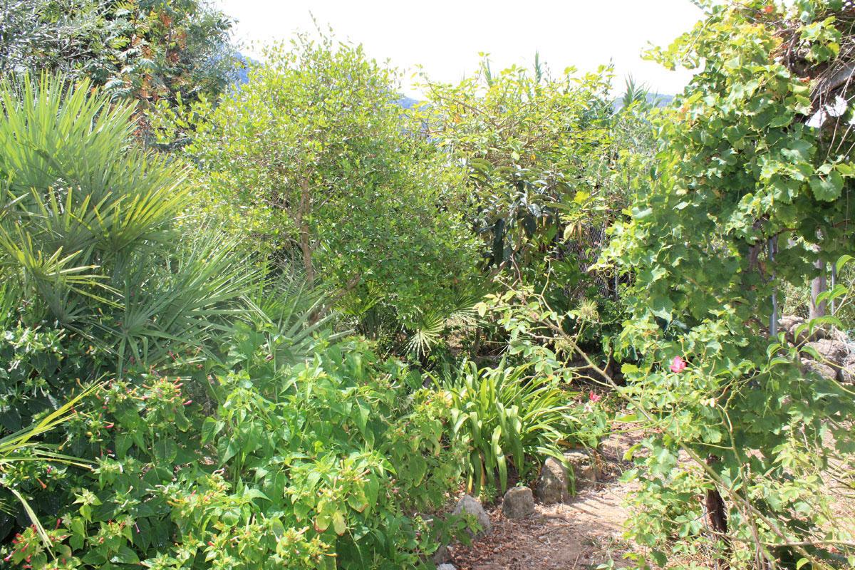Immobilien Bilder von Charmantes Steinhaus mit großem Garten...