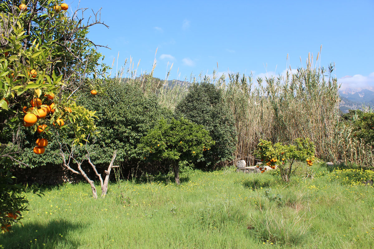 Imágenes de la propiedad inmobiliaria de Sol, vistas y mucho espacio....