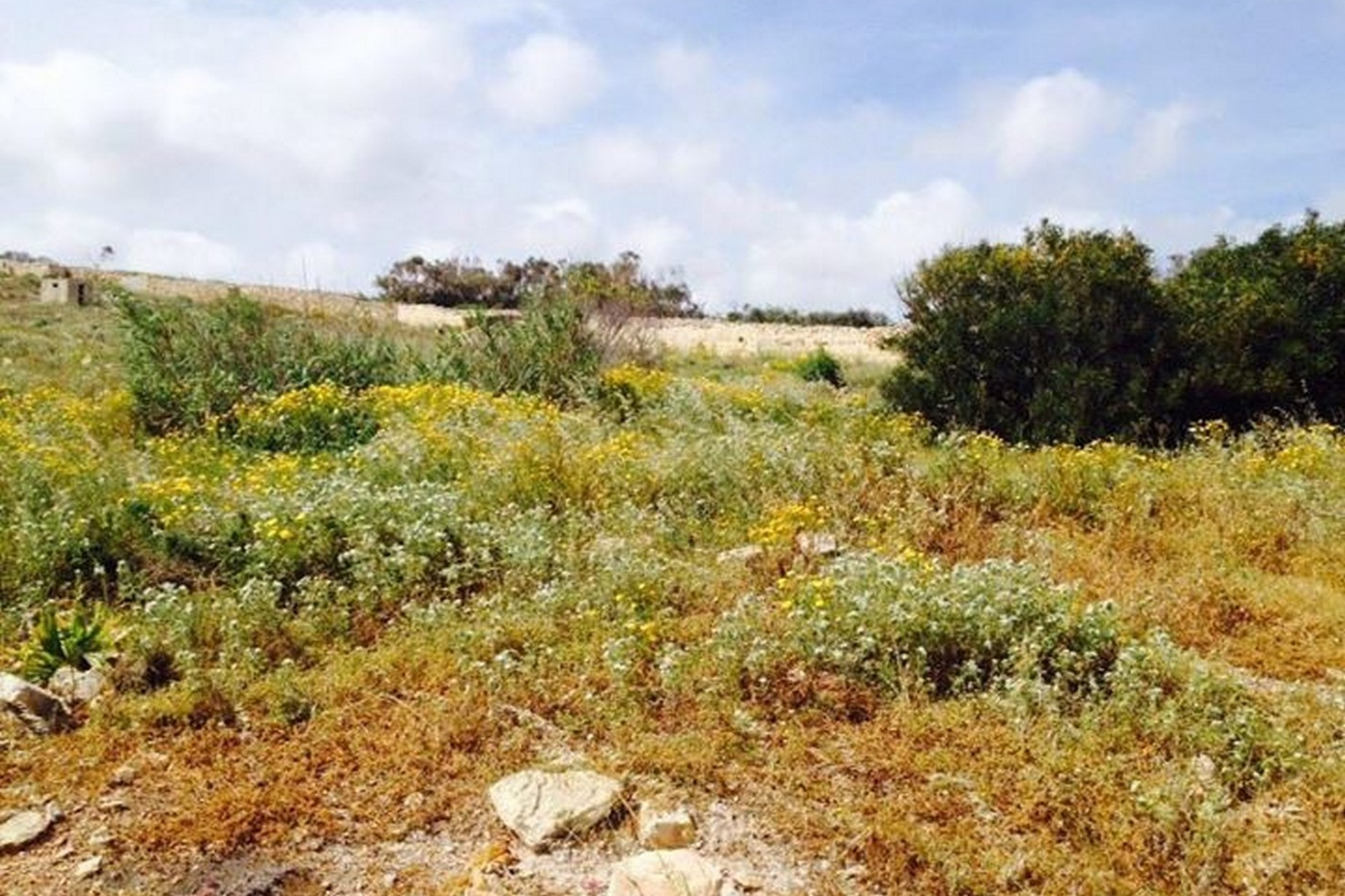 0 bed Site Residential For Sale in Zurrieq, Zurrieq - thumb 6