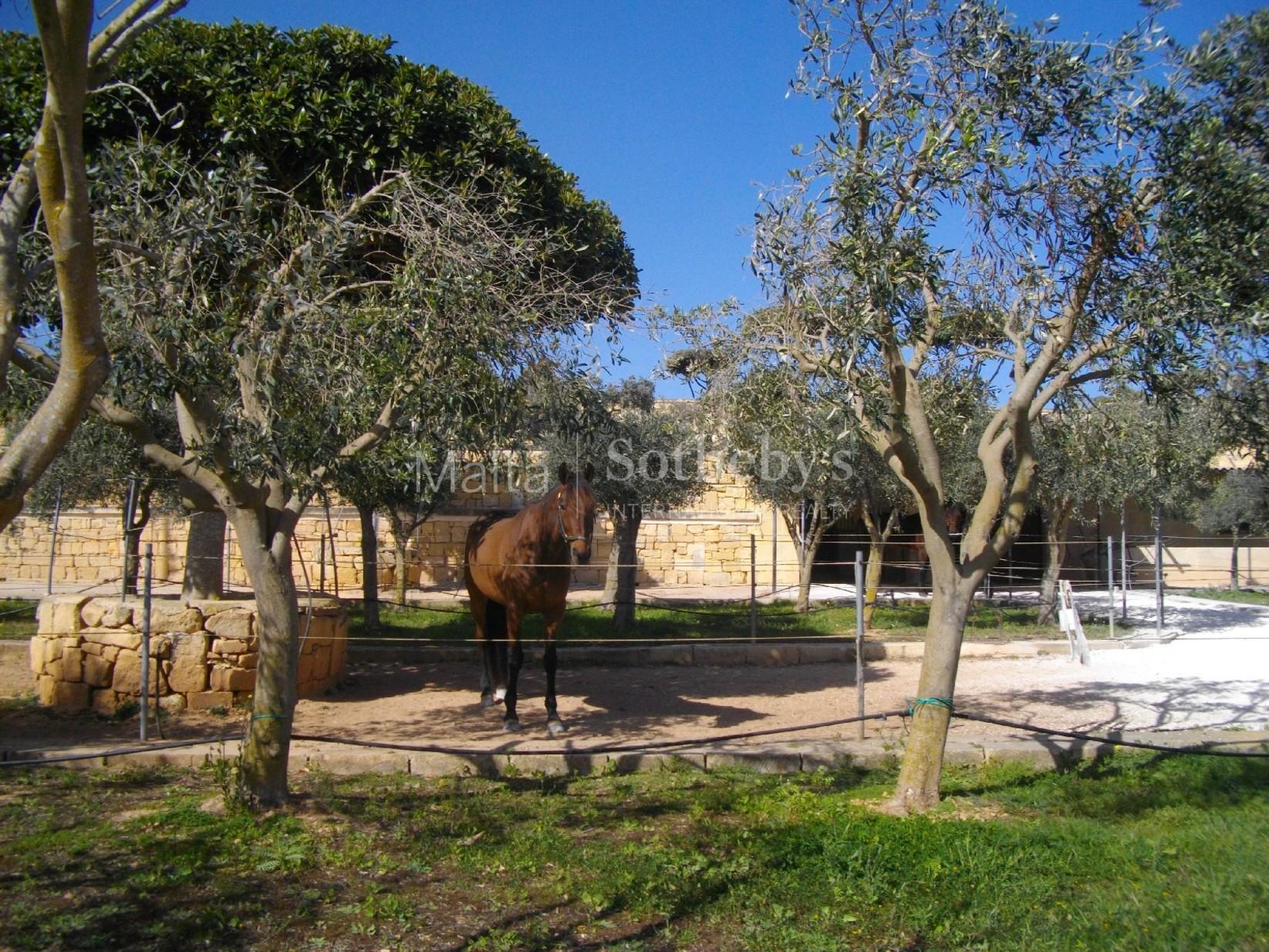 3 bed Farmhouse For Sale in Birzebbugia, Birzebbugia - thumb 8