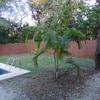 Costa Rica Guanacaste Playa Flamingo - Casa Miel # 16 Middle Home