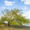 - B&B Ecolodge Potential in Puerto Jimenez, Osa Peninsula