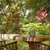 - 90 Hectare Jungle Oasis in the Mountains of Mal Pais