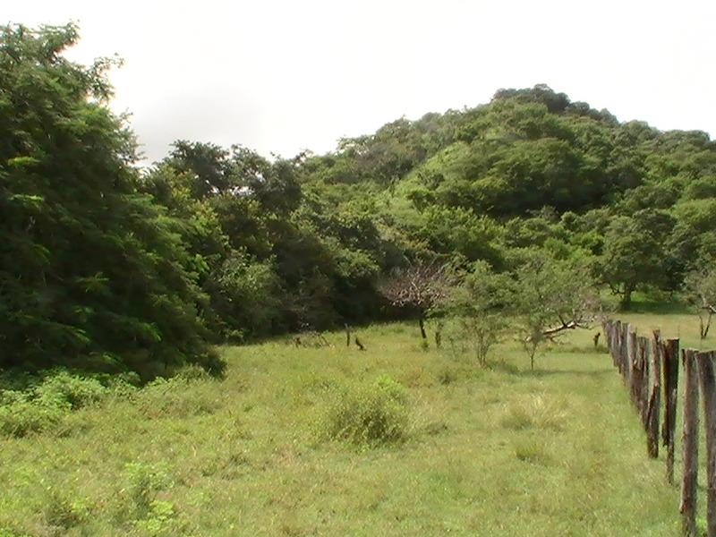 Playas Del Coco Image 2