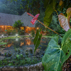 - Internationally Acclaimed Rainforest Ecolodge