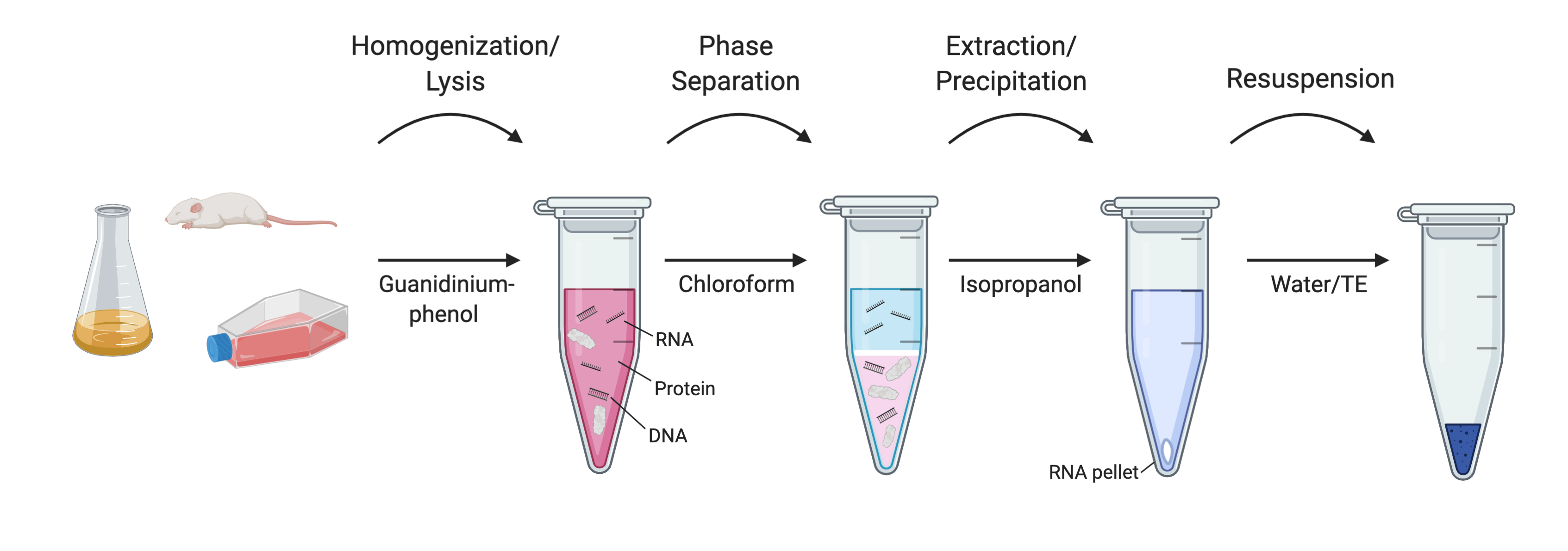 Rna Extraction Without A Kit
