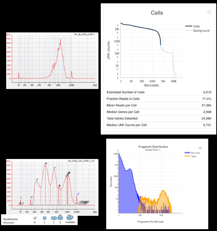 SnATAC-Seq On 10x ChromiumTM Platform For Fresh, Frozen