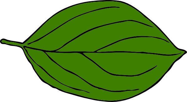 Image result for leaf clipart