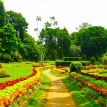 The World's Best Botanical Gardens