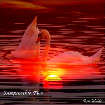 Inseparable Two Cover