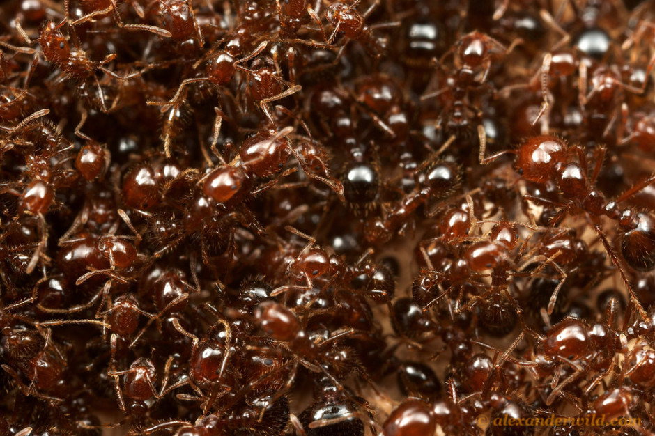 The Fecundity of Ants and the Goodness of Existing
