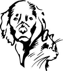 Office Assistant Full Time Job In Noblesville In At Low Cost Spay