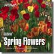 Spring Flowers NTSC