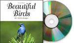 Beautiful Birds, Mac/Win