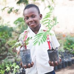 Moringa Tree Farms and Distribution