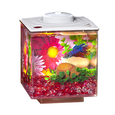 Betta Cube Gallon with LED White