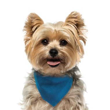 Pet Valu Dog Grooming Prices