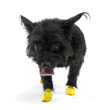Natural Rubber Waterproof Dog Boots thumbnail1
