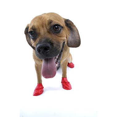 Natural Rubber Waterproof Dog Boots thumbnail4