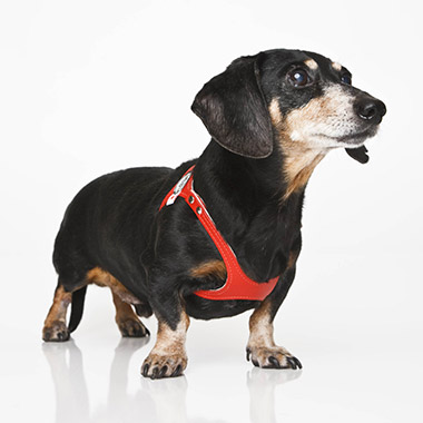Dog Harness, Red