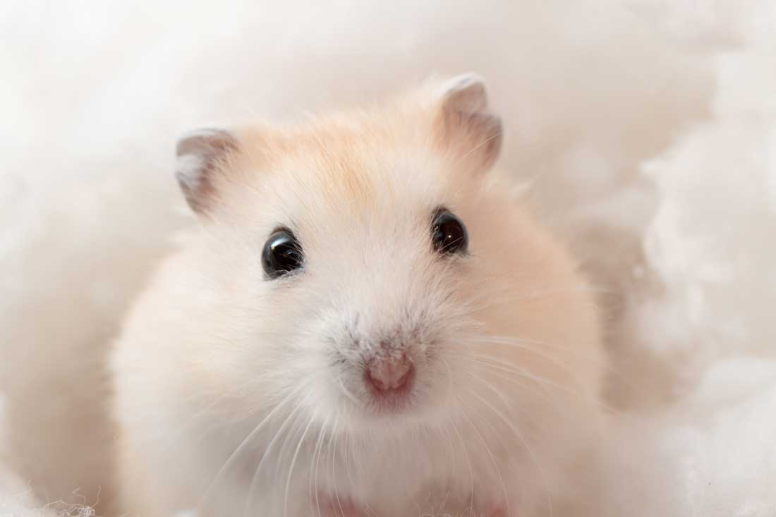 Hamster 101 Pet Articles Ca Pet Valu Pet Store Pet