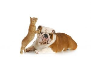Indoor Games To Play With Your Furry Friend