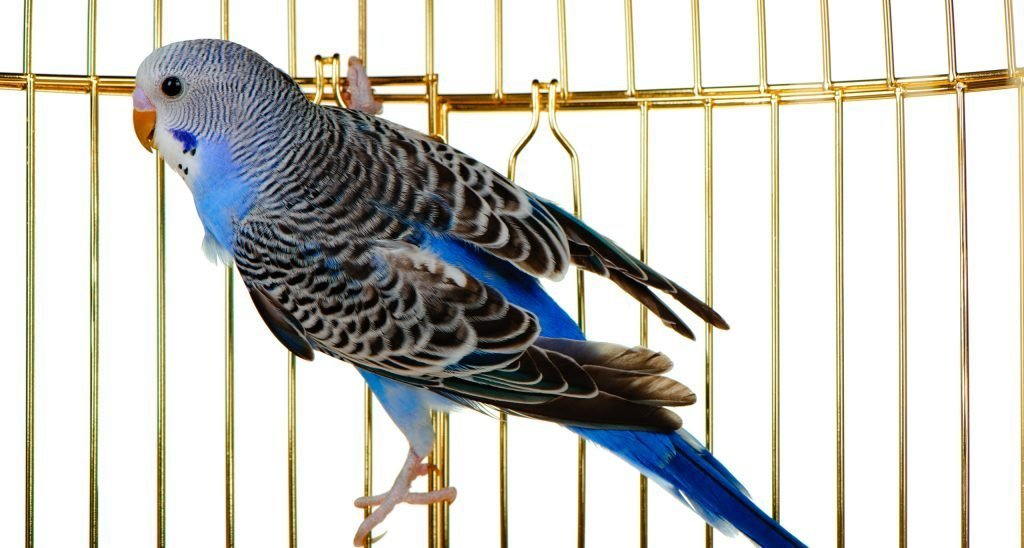 How To Clean A Bird Cage Pet Articles Ca Pet Valu Pet