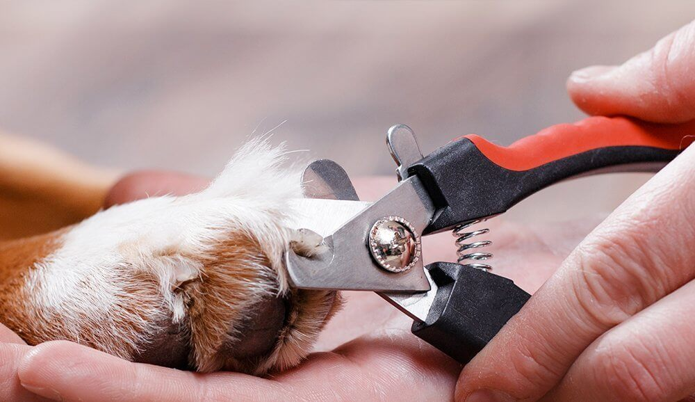 How To Trim Your Pet S Nails Pet Articles Ca Pet Valu