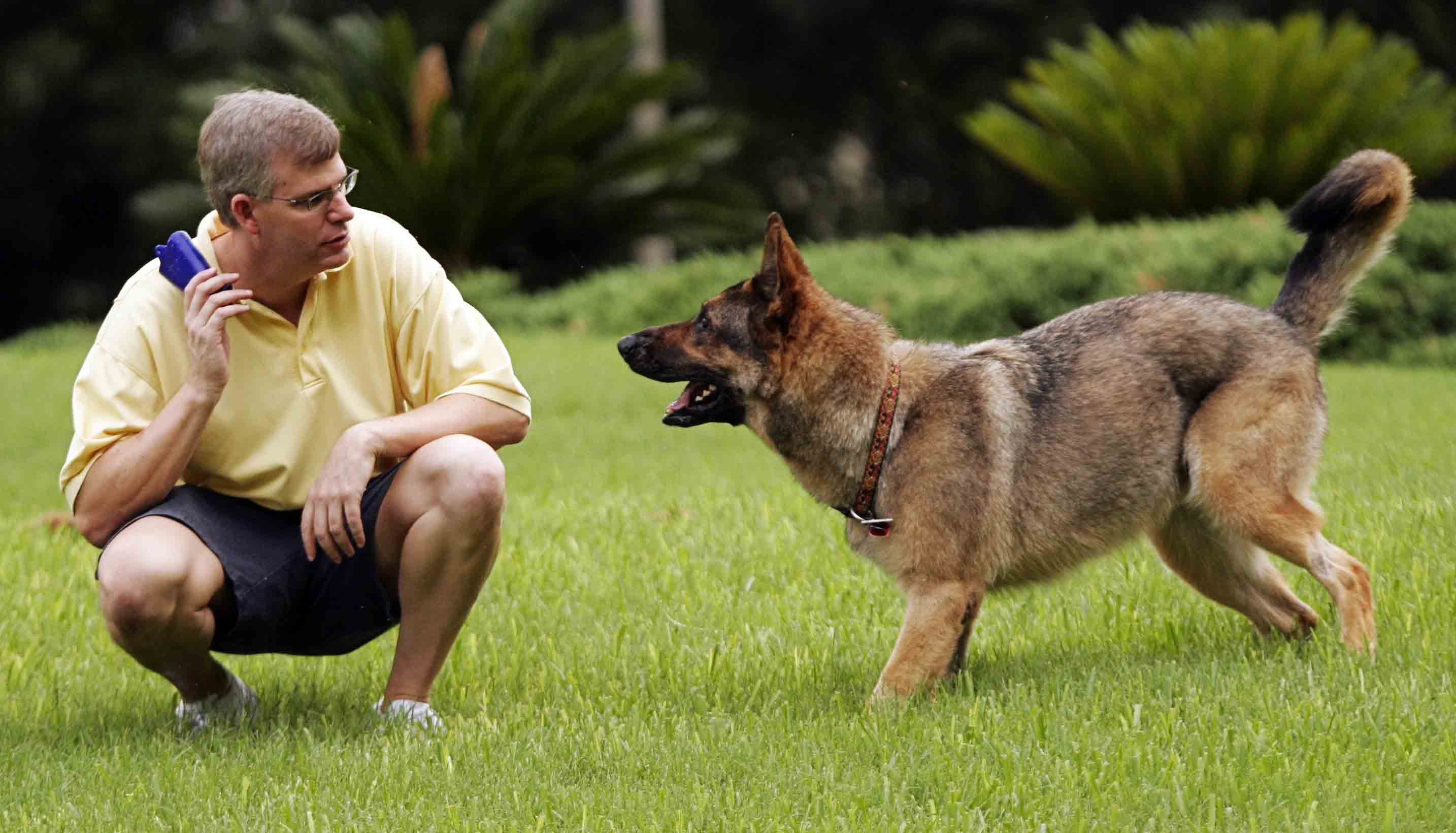 How to Hire a Dog Trainer