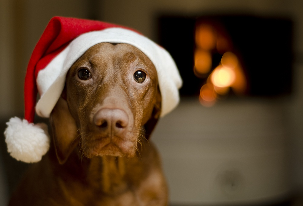 Christmas Safety - Pet Articles   Bosley's by Pet Valu   Pet Store   Pet  Food, Treats and Supplies