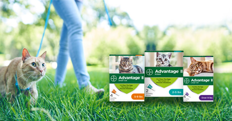 Help protect your cat from parasites with Advantage® II for cats