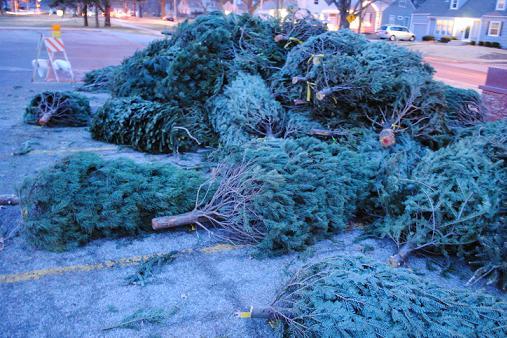 Prairie Village Resident Helps Get Christmas Trees
