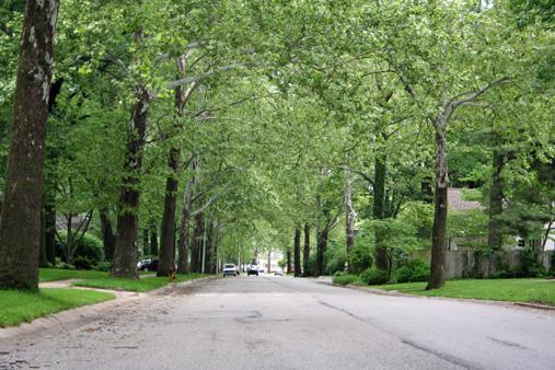 Prairie_Village-Sycamore-trees