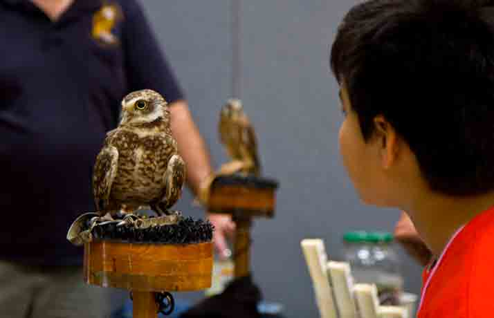 A burrowing owl was among the feathered friends on display by Operation Wildlife.