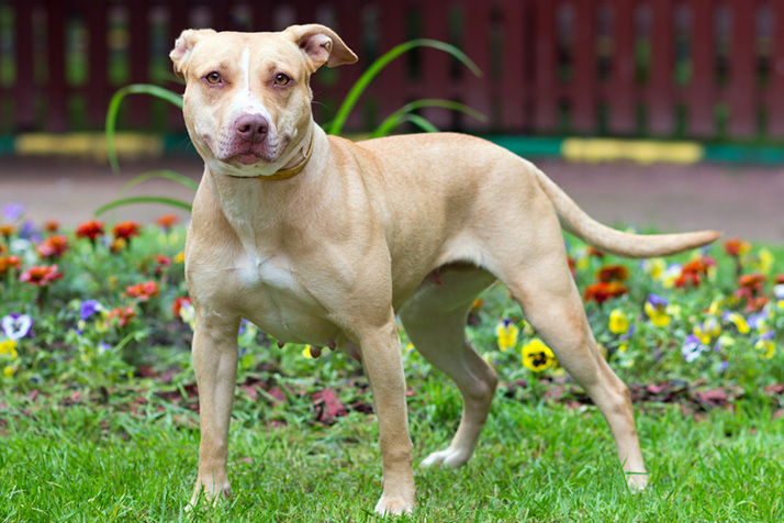 "The city of Mission Hills made a technical change to its ordinance regarding dogs that will categorize all pit bulls as ""dangerous"" instead of ""potentially dangerous."" The requirements of pit bull owners in the city will not change, however."