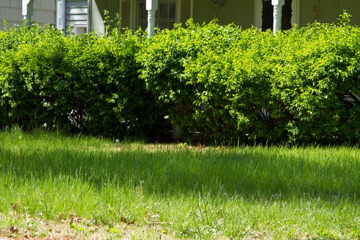 Homeowners with overgrown yards and bushes may be hearing from codes enforcement officers in Prairie Village.